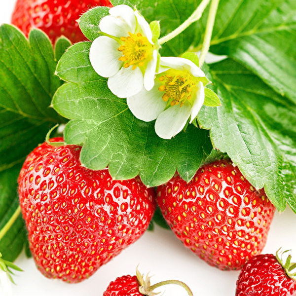 Fragaria_Strawberry_463152_1280x800.jpg
